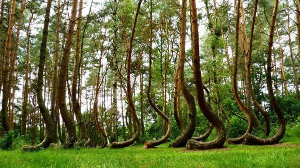 Forets insolites arbres etranges monde 1